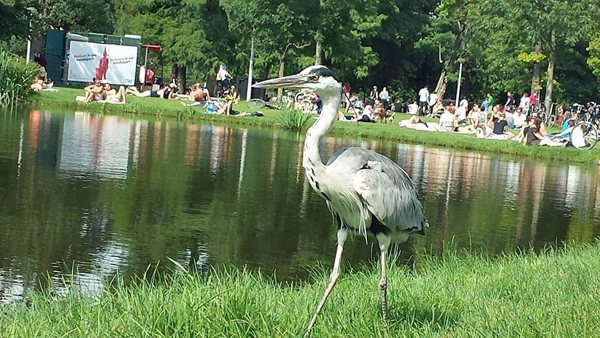 Coole reiger in Vondelpark