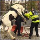 Bereden Politie