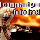 cat gun free