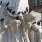 Duiven op het monument op de Dam - Foto: Arnoud de Jong