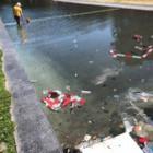 Festi-afval na het feest - foto: Esther van der Meer